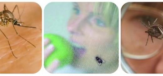 ехали комарики на воздушном шарике