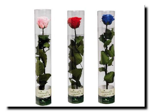 неувядающие розы подарок