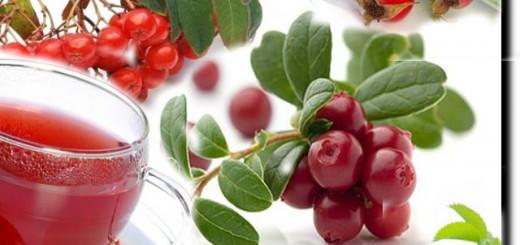 полезные целебные ягоды