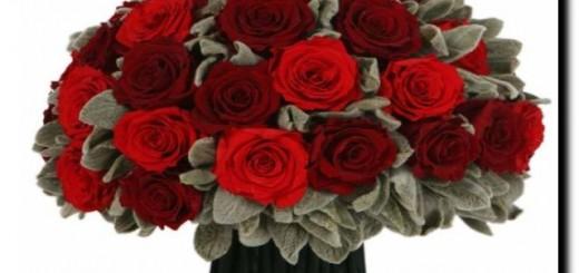 розы стабилизированные