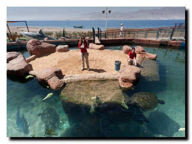 подводная обсерватория израиль