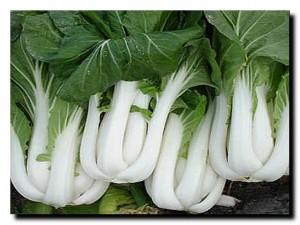 польза свежей капусты
