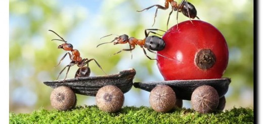 опасные домашние насекомые