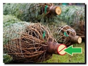 как сохранить елку подольше