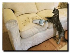 кошка и чистота