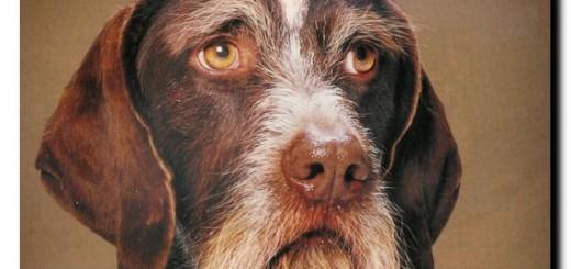 поведение старой собаки
