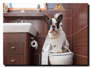 собака и чистота