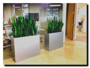 офисное озеленение