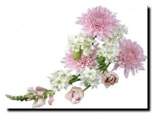 запах хризантем