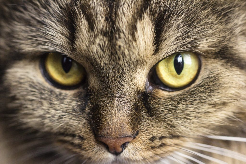 Какие запахи не переносит кошачий нос