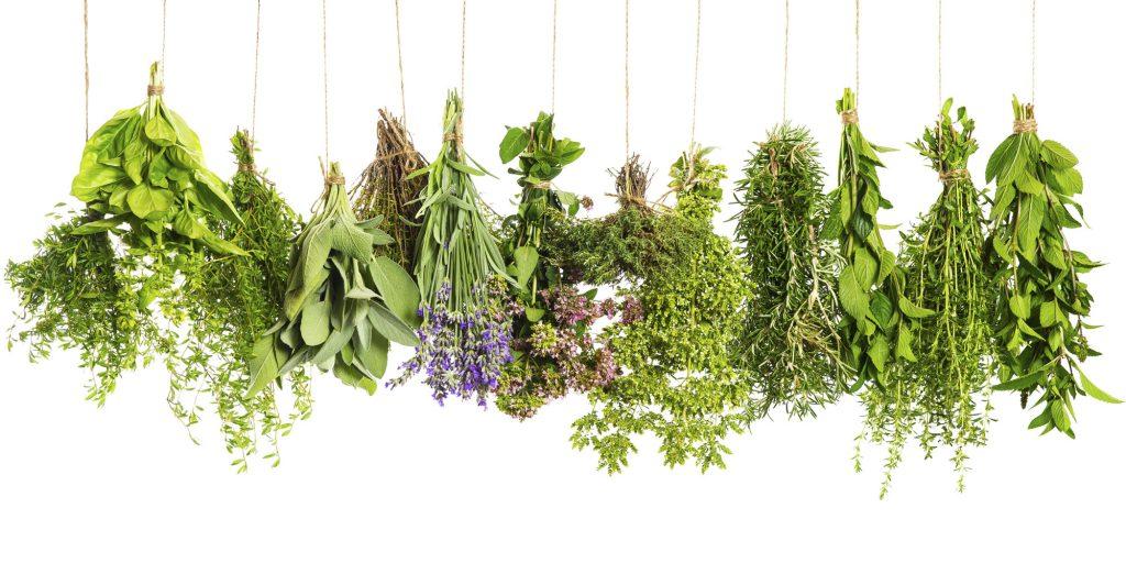 Пряные травы на подоконнике
