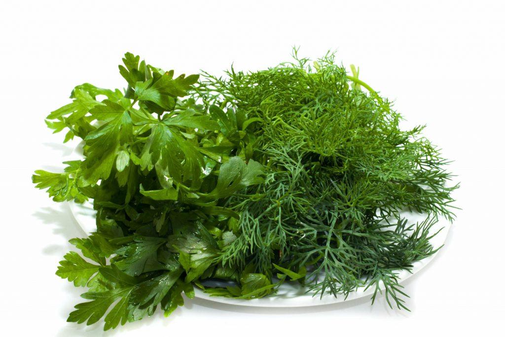 Укроп и петрушка – полезная зелень