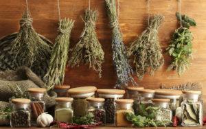 Пряновкусовые растения и травяной чай для сауны и бани