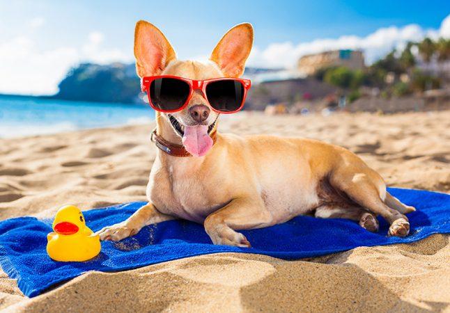 Стрижки собак, правила ухода за собакой летом.