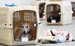 Как правильно организовать перевозку животных
