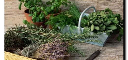 рецепты масок из трав