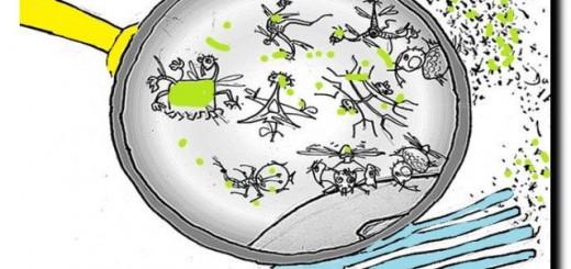 микробы на кухне