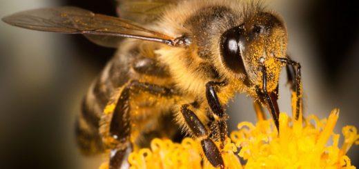 Полезные продукты пчеловодства и медовая диета