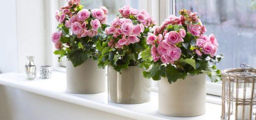 Цветы в доме - каждому свое место
