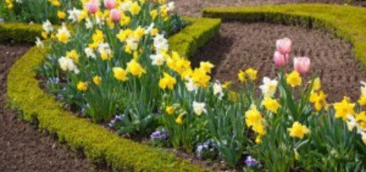Весна близится, и скоро в садах покажутся первые ее посланники – мелколуковичные цветы и первоцветы. Первые весенние цветы имеют особое обаяние и очень радуют своим появлением. Первые цветы так же очень романтично смотрятся на фоне природы, которая ещё не проснулась после зимы.
