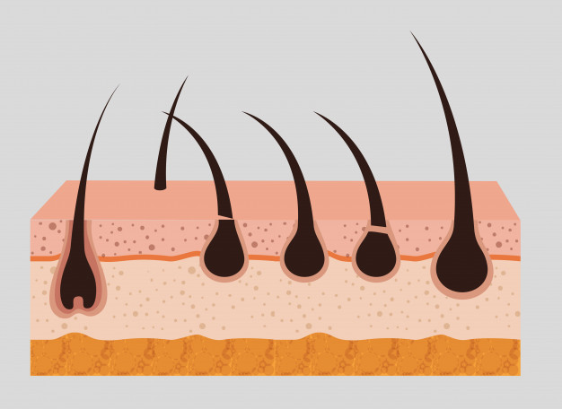 layered skin structure 24877 54530